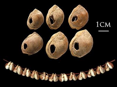 Bland annat slitaget och var och hur man hittat dessa snäckor gör att man antar att de burits som smycken. När de hittades revolutioneraded